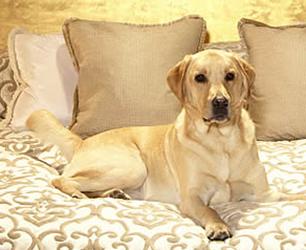 Pet Friendly Hotels UK