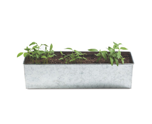 Foodie Garden Plants Pepper £12.95