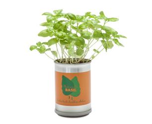 Micro Giardini Plants Basil