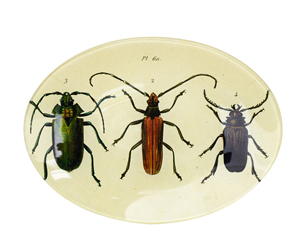 insect home wares