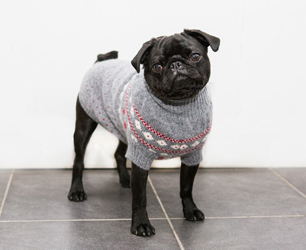 Ruby rufus dog sweater lifestle