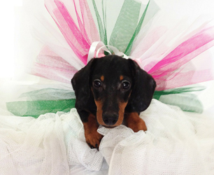 How to Ensure Your Pets Are As On-Trend As You