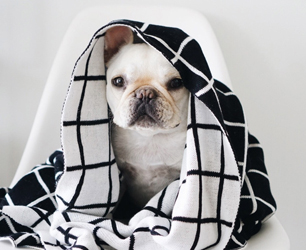 Feat-pipolli-dog-blanket