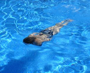 feat-swim-422546_1280